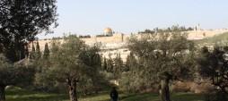 Day 4—Where Jesus Prayed